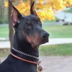 Si fueras perro ¿De que raza serías?