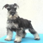 Keep calm and hug a schnauzer